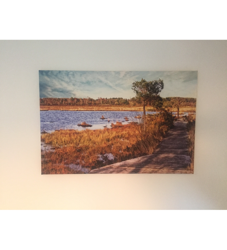Thursley Boardwalk Canvas