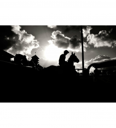 Limited Edition Horse Racing Prints
