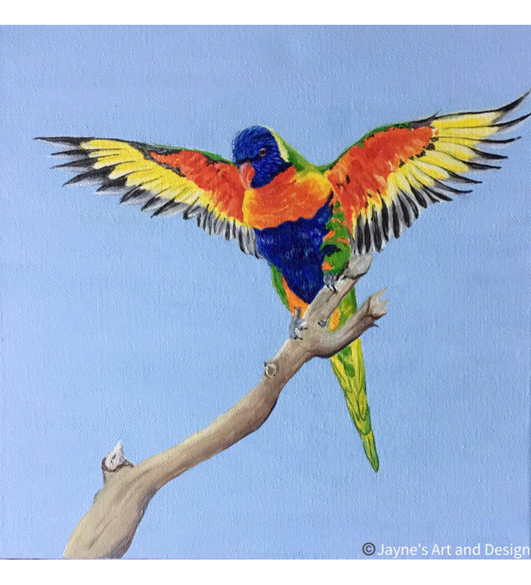 Flying - Rainbow Lorikeet
