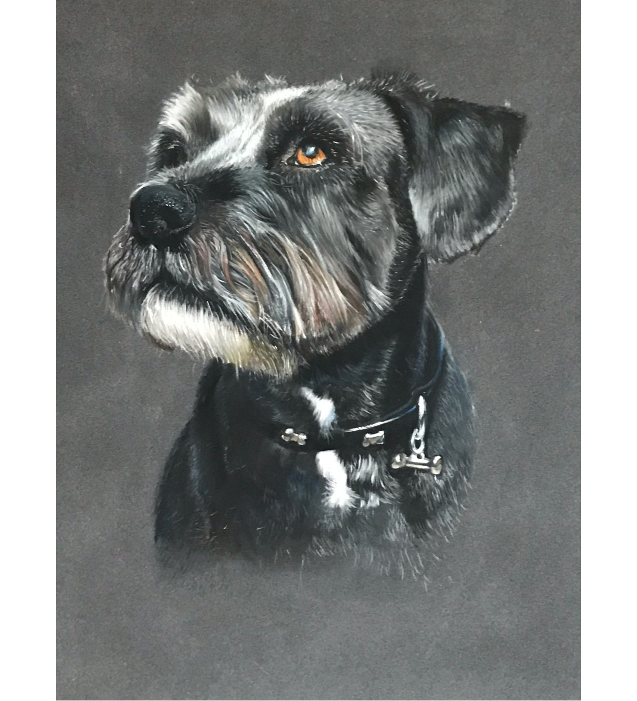 Commisioned pet portraits