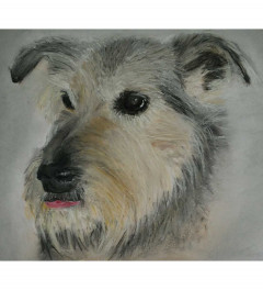 Scamp - SOLD
