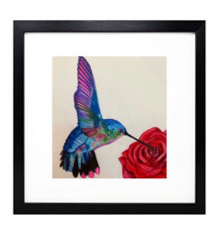 Hummingbird at a rose