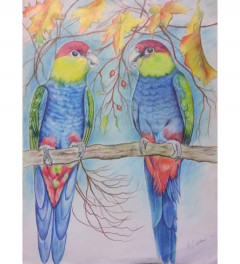 Red capped parrots