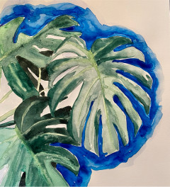 Cheese plant with blue