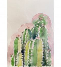 Cacti with pink