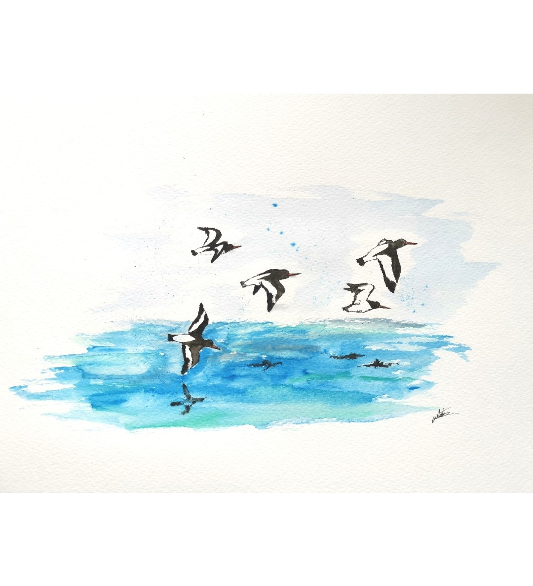 Original watercolour of a flock of oyster catchers