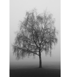 Misty trees 2 - Limited Edition