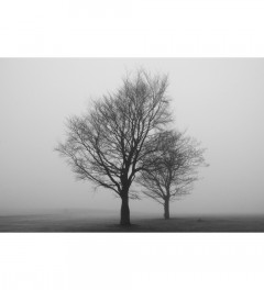 Misty trees 3 - Limited Edition