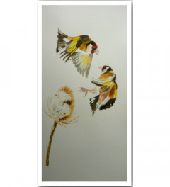 'Goldfinch squabble'